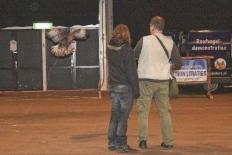r32roofvogelshow1