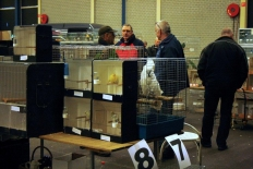 vogelmarkt-03