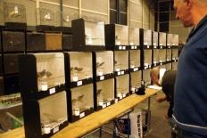 vogelmarkt-035