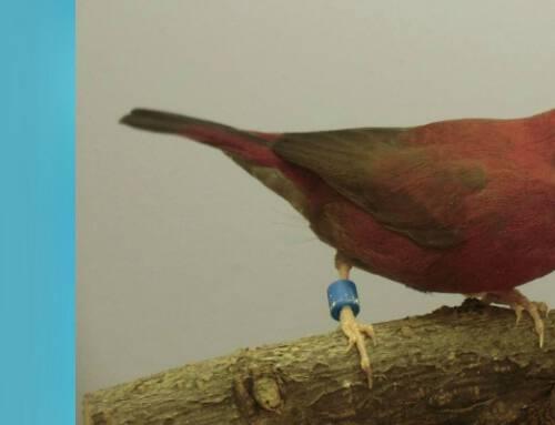 Vogelmarkt 16 oktober kan definitief doorgaan!