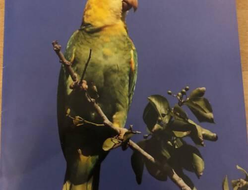 Mooi artikel over vogelmarkt in Parkieten Sociëteit maart 2021